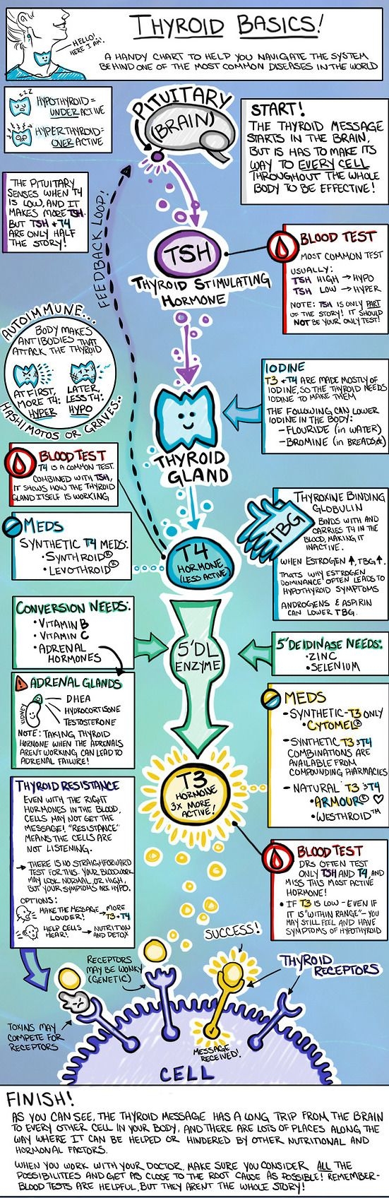 The artist DOES NOT have thyroid cancer, she has another thyroid disease, so her commentary is very much geared towards having thyroid disease and A THYROID STILL PRESENT. That said, I think this illustration is very helpful in understanding the basics of how thyroid hormone should work in a healthy human body, and can help us understand better in terms of what is going on.