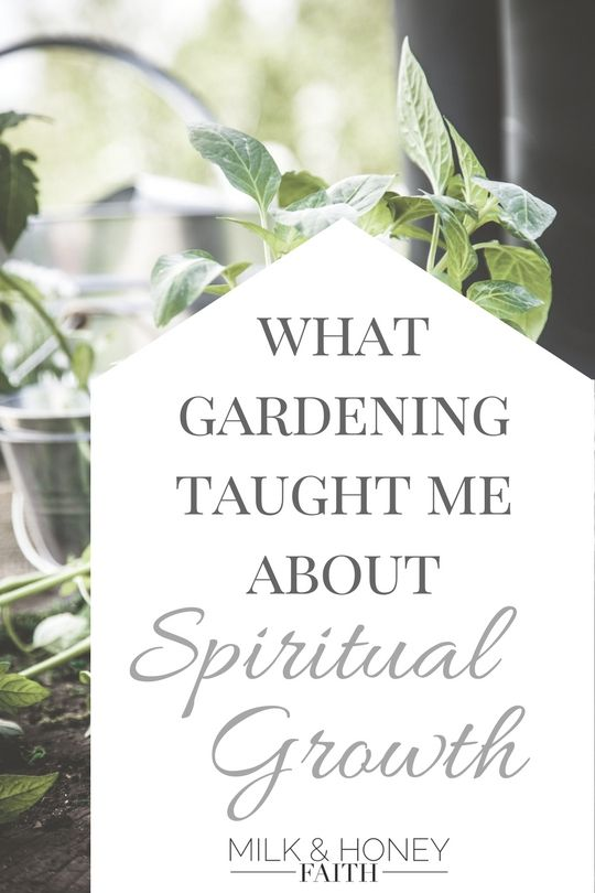 What Gardening Taught Me About Spiritual Growth.  Little did I know that my beginner's garden would teach me something about staying connected to the vine.  Click image to read blog post - Milk & Honey Faith