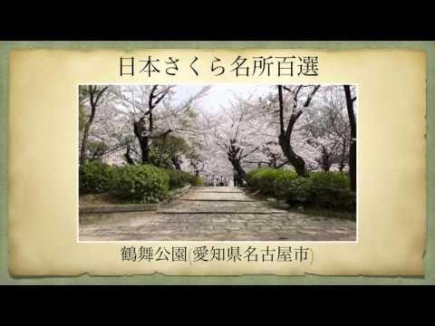 【日本さくら名所百選】鶴舞公園(愛知県名古屋市)[Beautiful cherry blossoms in Japan]
