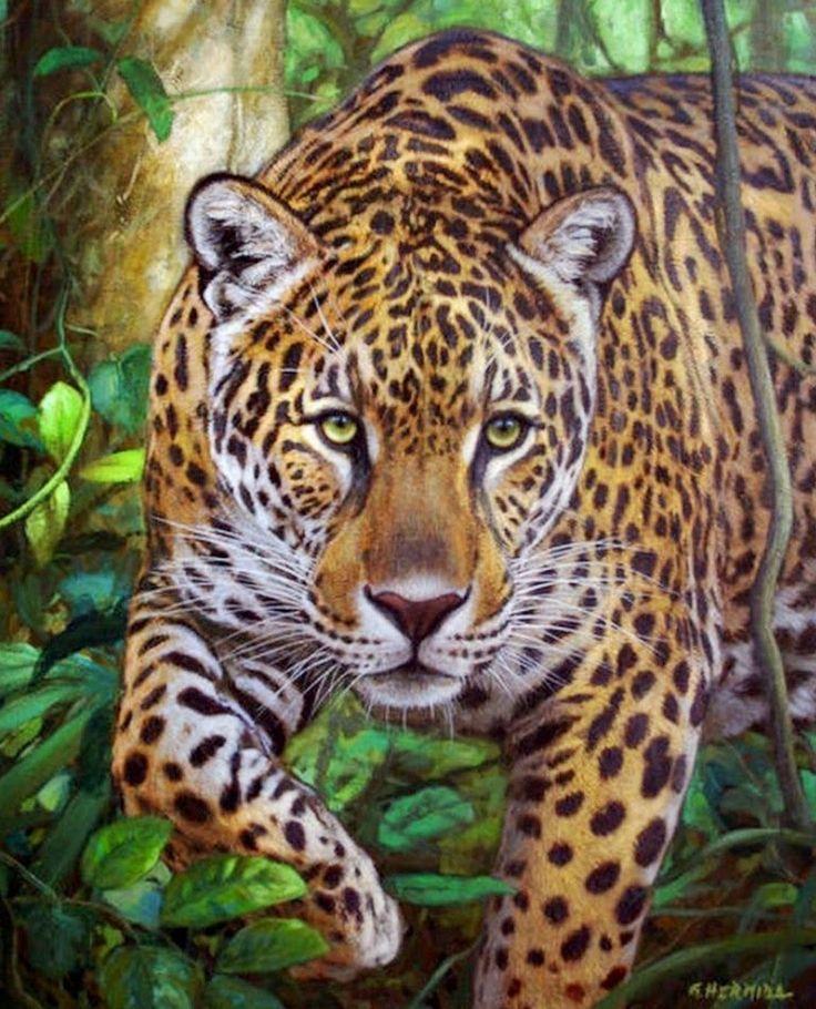 Jaguar Felis Onca: 1000+ Images About Gabriel Hermida On Pinterest