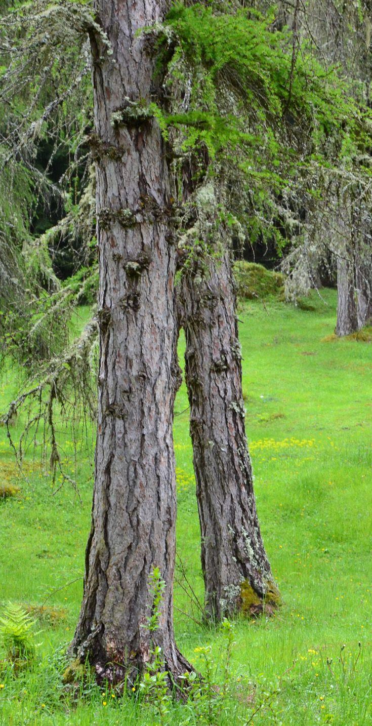 Gras and wood. Lermoos, Austria.