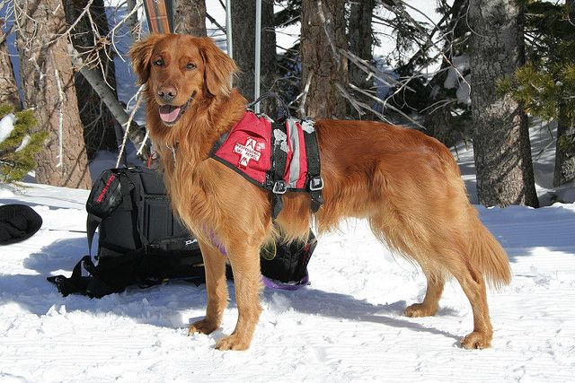 On Tuesday February 5th Alpine Meadows Hosted A Full Day Of Search