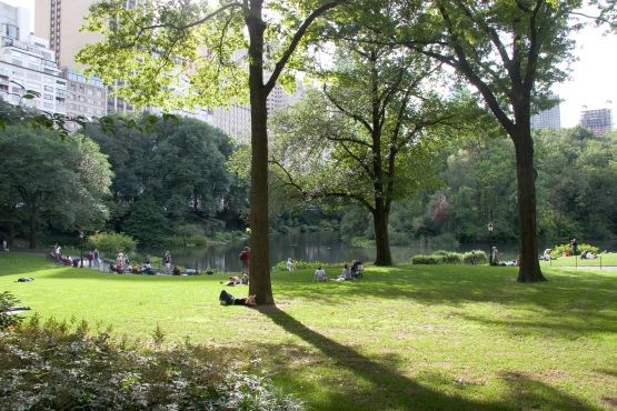 7 best images about new york on pinterest nyc for Things to do at central park