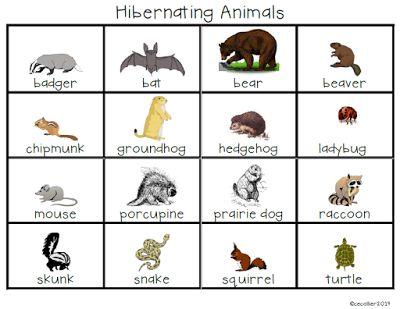 The W.I.S.E. Owl : December Day 16 - Hibernating Animals