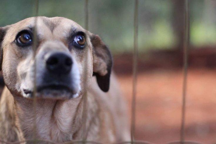 Crimes contra os animais ganham delegacia eletrônica -     Já está em funcionamento a Delegacia Eletrônica de Proteção Animal (Depa), para receber denúncias de maus tratos e abusos contra animais. Agora, a Secretaria da Segurança Pública de São Paulo (SSP-SP), disponibiliza em seu site um campo para tais registros. É só acessar ohttp://w - http://acontecebotucatu.com.br/geral/crimes-contra-os-animais-ganham-delegacia-eletronica/