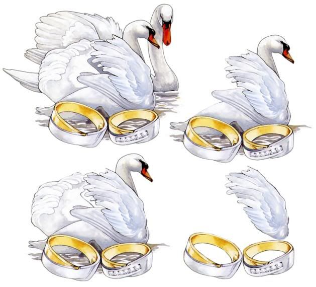 WEDDING SWANS WITH RINGS
