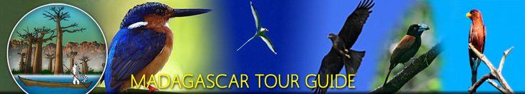 Birding Tour   Madagascar Tour Guide   english speaking local tour guide company in Madagascar