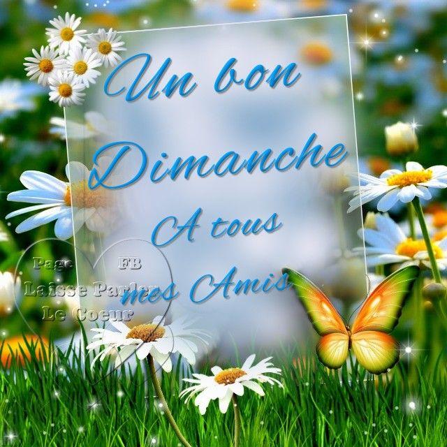 Un bon Dimanche a tous mes amis #dimanche papillon fleurs nature week end