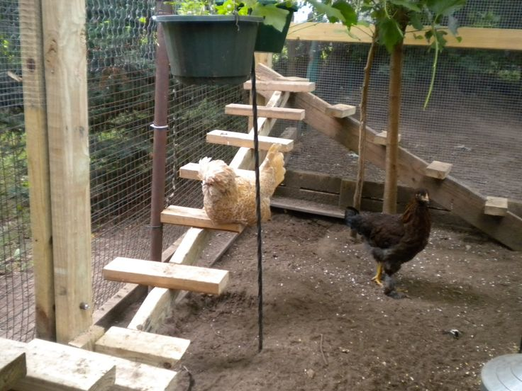 chicken playground - Google Search