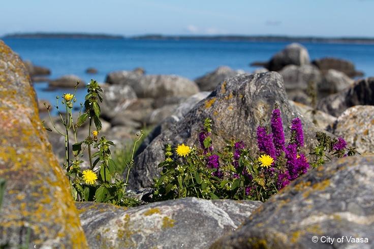 Diverse vegetation @ Vaasa archipelago. www.visitvaasa.fi. Photo Jaakko Salo.