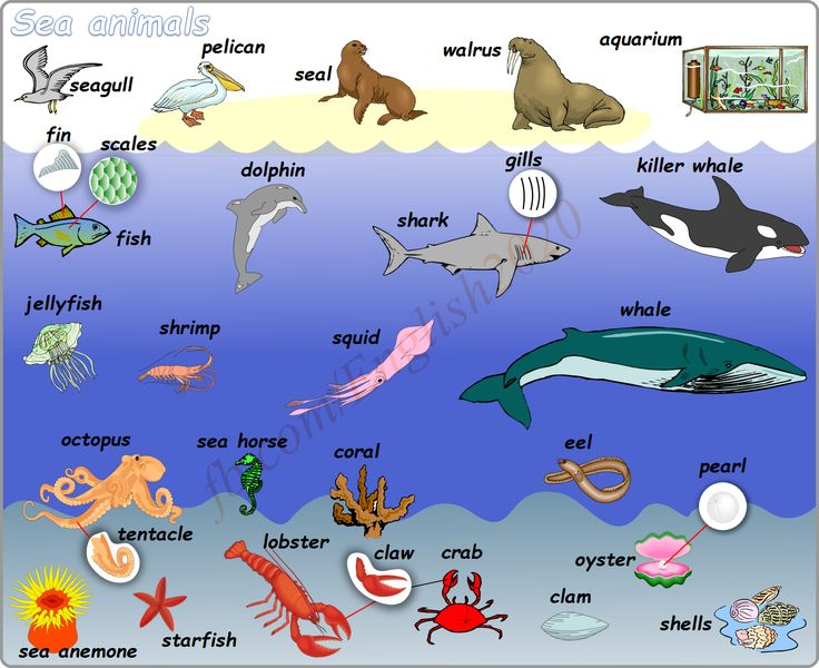 Vocabulary: Sea animals