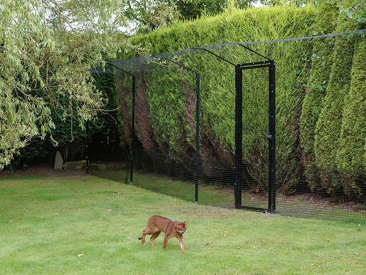 Cat Enclosures and Cat Enclosure Systems