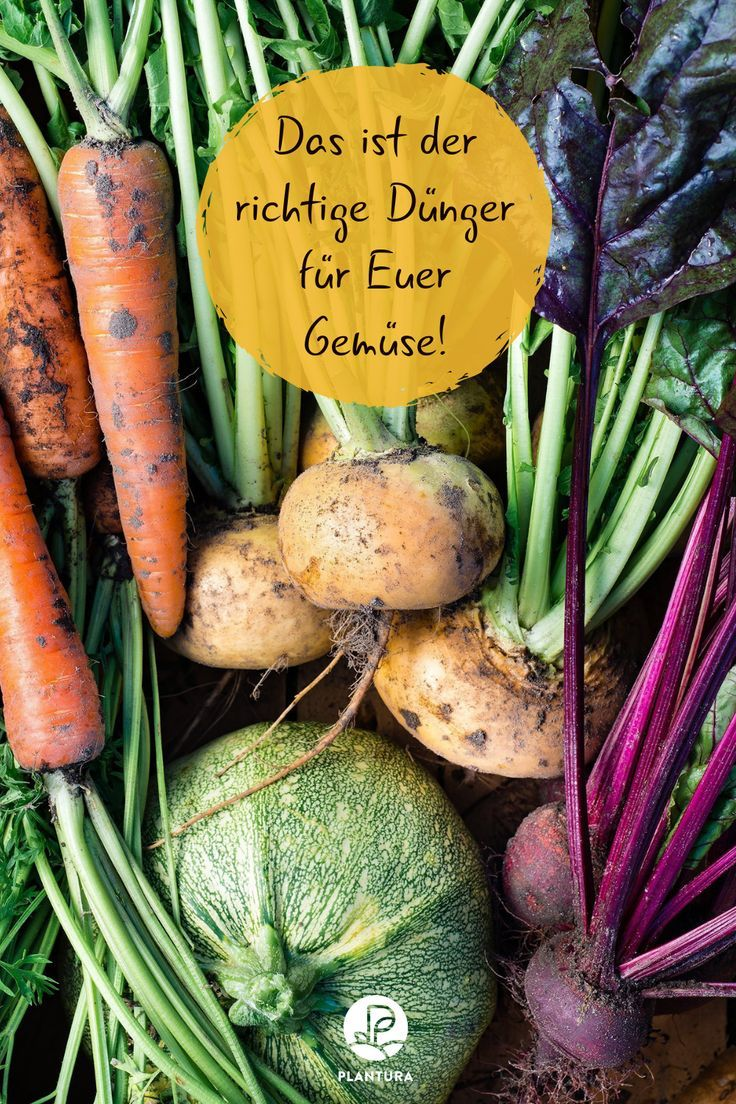 Gemusedunger Eigenschaften Vorteile Verwendung Fruchte Und Gemuse Gemuse Anbauen Gartentipps
