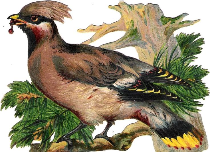 Oblaten Glanzbild scrap die cut chromo  Vogel bird 14,5 cm  Ast branch