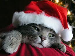 """Bom dia! A passos largos caminhamos para aquele dia que é mágico para miúdos e graúdos...   Para os miúdos porque o Natal existe e deveria ser todos os dias do ano....  Para os graúdos porque tem a capacidade de nos transportar a locais da nossa memória fantásticos em que o Natal existia...  Razão têm o poeta quando disse :  """" Natal é sempre que um homem quiser""""! Pois nós queremos que seja todos os dias!!!!"""