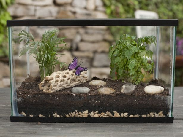 How to make your own terrarium. This would be a great garden for those with homes that have low light or plant loving cats!