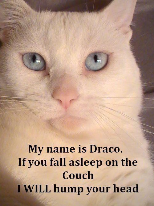 Love this cat! Naughty cat ! Hot sauce ?