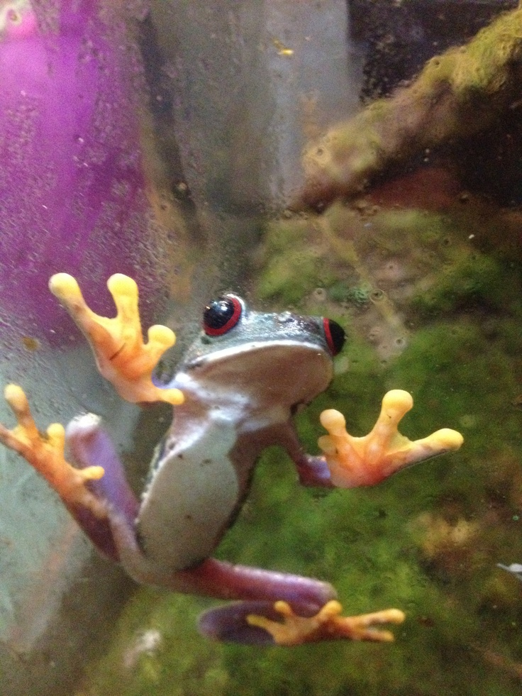 Frog .... a real, live Frog!