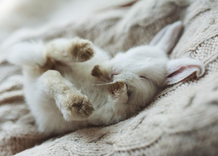 4051 best bunnies rabbits oh my images on pinterest bunnies cutie bunny wabbit sciox Image collections