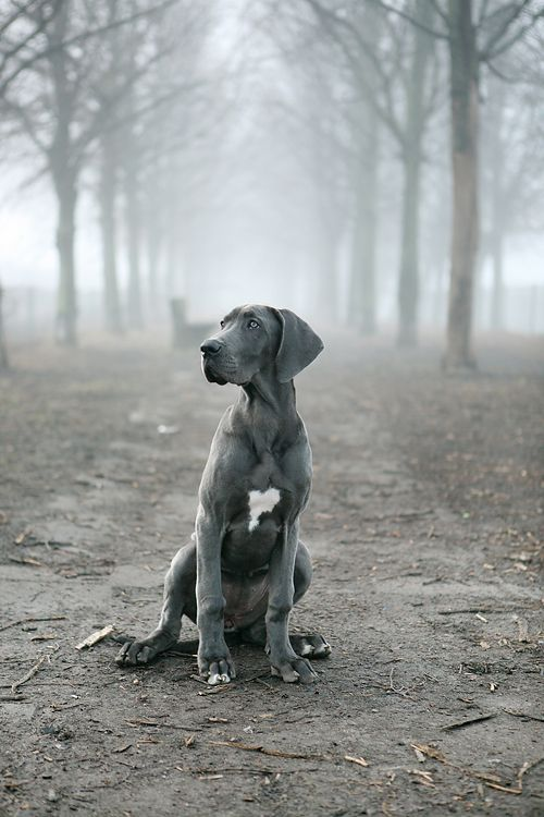 Beautiful picture. Wish my dog would sit still long enough for me to snap one like this!!