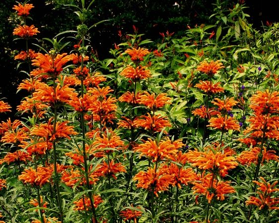 there are many benefits to planting trees shrubs flowers and other vegetation to