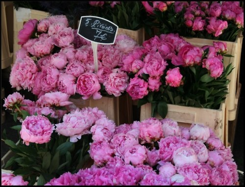Can't you just smell them? I adore peonies!