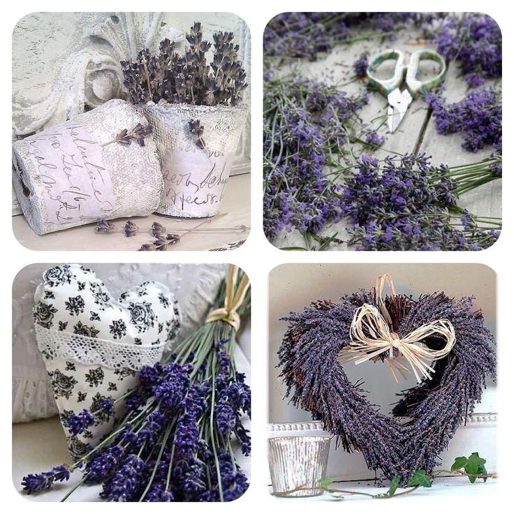 Lavendel ❤ Lavender