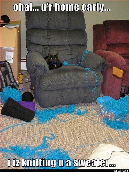 haha: Animals, Funny Cats, Knitting, Funny Stuff, Funnies, Funny Animal, Kitty