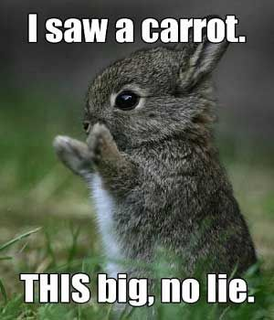 20 Funny Animal Pictures With Captions