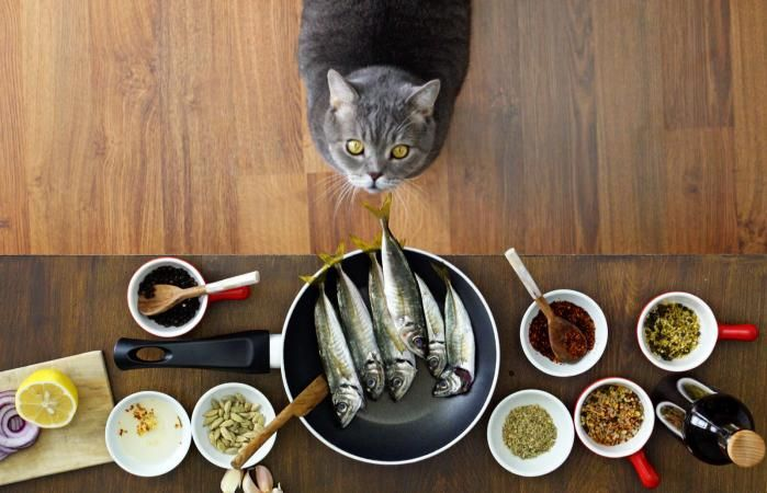 8 Irresistible Homemade Cat Food Recipes Lovetoknow In 2020 Homemade Cat Food Cat Nutrition Dry Cat Food