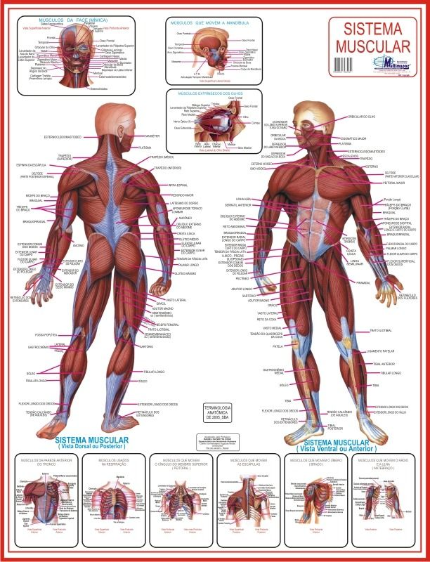 11 best MAPA DOS MUSCULOS images on Pinterest | Friends, Maps and Search