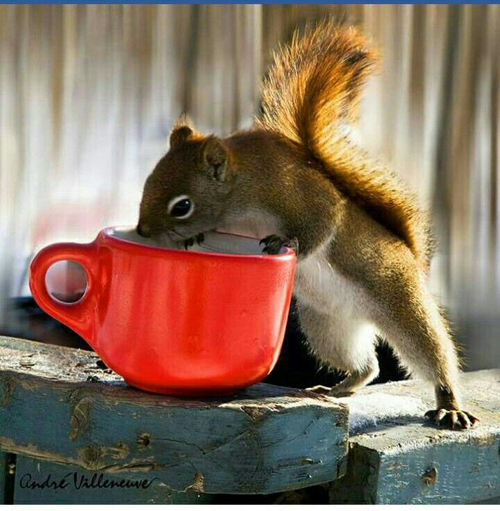 Mmmm ... nothing like a cuppa to start your day!  :)