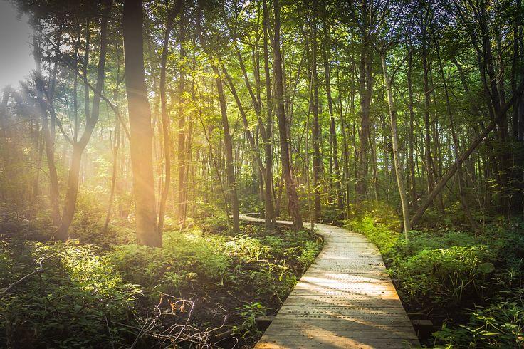 Leśna emigracja jest cudowna, ale ma też jeden poważny minus. Nie martw się - dla Ciebie to akurat dobrze.