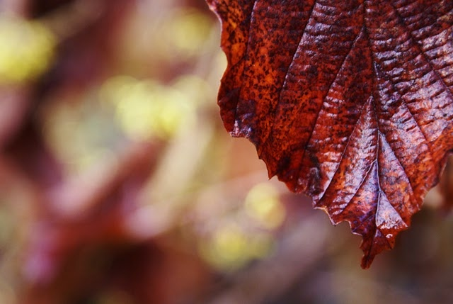 autumn: Autumn Spirit, Fall Colors, Autumn Leaves, Flames Autumn, Fall Harvest, Hunting, Autumn Thoughts, Fantastic Photos, Adorable Autumn