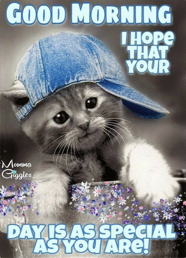 I Hope That Your Day Is As Special As You Are Good Morning Cute Cats Cats And Kittens Kittens Cutest