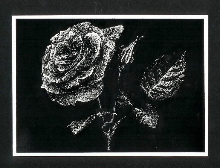 The Gallery For Scratch Art Roses