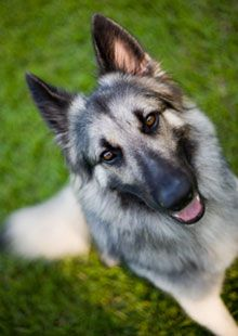 Why Haven't Pet Owners Been Told These Facts about Heartworm?  http://ow.ly/9FlKc