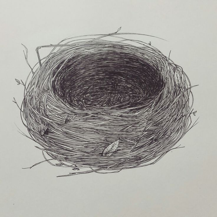 Nest, pen and ink | Ana María Guarín