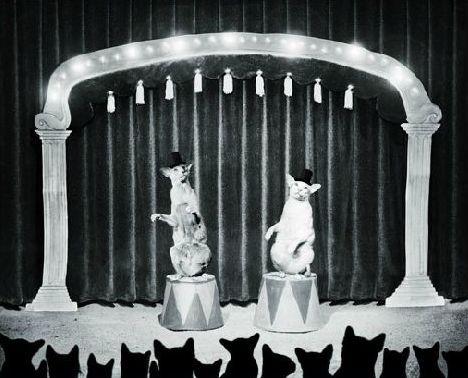 """The Night Show"" | Helena Blomqvist"