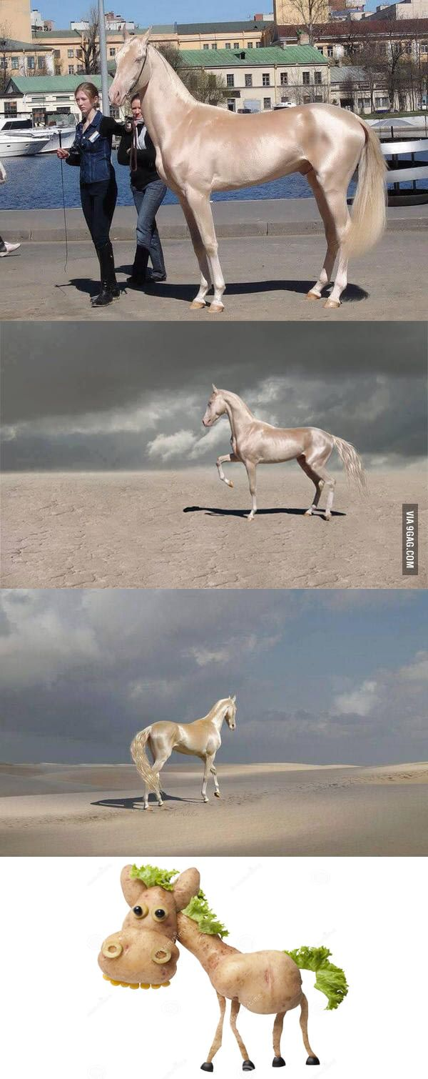 Any horse lovers ? This is Akhal-Teke horse, said to be the most beautiful horse in the world!