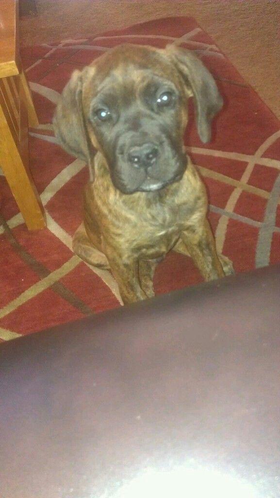 Cutest Puppy EVER  #RockyBear