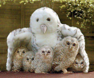 A biodiversidade em belíssimas imagens - ANDA - Agência de Notícias de Direitos Animais