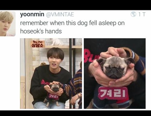 J-Hope just looks so confused || Idk which is cuter Hobi's expression or the dog lol #Hobi #JHope