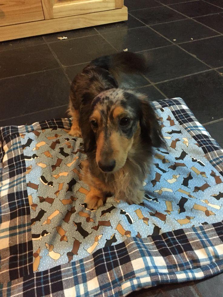 Mini quilt for mini dacshund Oreo