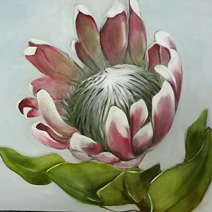 Melissa Von Brughan, Protea study. Oil on canvas  76cm x 100cm. Sold