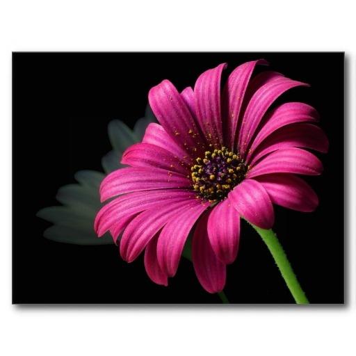 Garden Flowers Postcard Photography