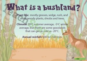 What is a Bushland? Poster