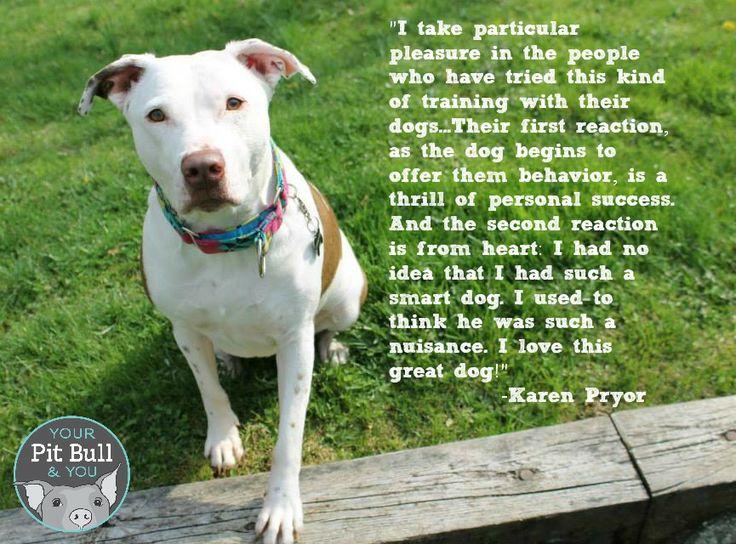 Dog Training Cats Karen Pryor