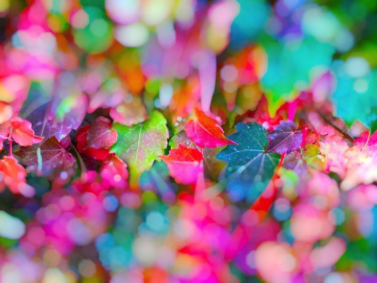 Colorful bokeh #foliage #edera #bokeh  #leaves #light #sunset #silhouette  #sun #dream #summer #autumn  #holiday  #vacancy #viaggiare #sunset  #nikon  #nikond90 #nikonitalia #twitter