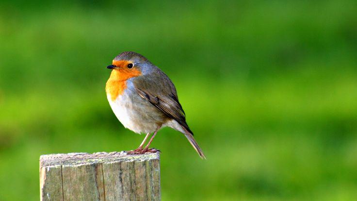 Birds Desktop Wallpapers - Wallpaper Cave | Обои с птицами ...